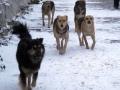 К ловцу бездомных собак приставили полицейского