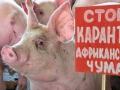 В Сосновоборске введен режим ЧС из-за африканской чумы свиней