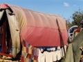 Жители Сосновоборска паникуют из-за табора цыган: обвиняют в кражах и убийствах