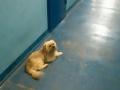 Собака неделю сидела возле тела умершего хозяина