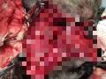 Под Сосновоборском неизвестные расстреляли бродячих и домашних собак