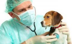 В ветеринарную клинику требуется